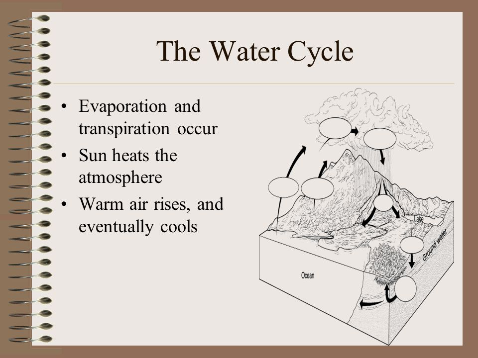 The Water Cycle Evaporation and transpiration occur Sun heats the atmosphere Warm air rises, and eventually cools