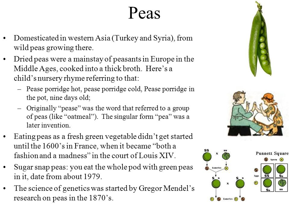 Peas Domesticated in western Asia (Turkey and Syria), from wild peas growing there. Dried peas were a mainstay of peasants in Europe in the Middle Age