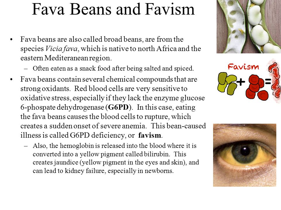 Fava Beans and Favism Fava beans are also called broad beans, are from the species Vicia fava, which is native to north Africa and the eastern Mediter