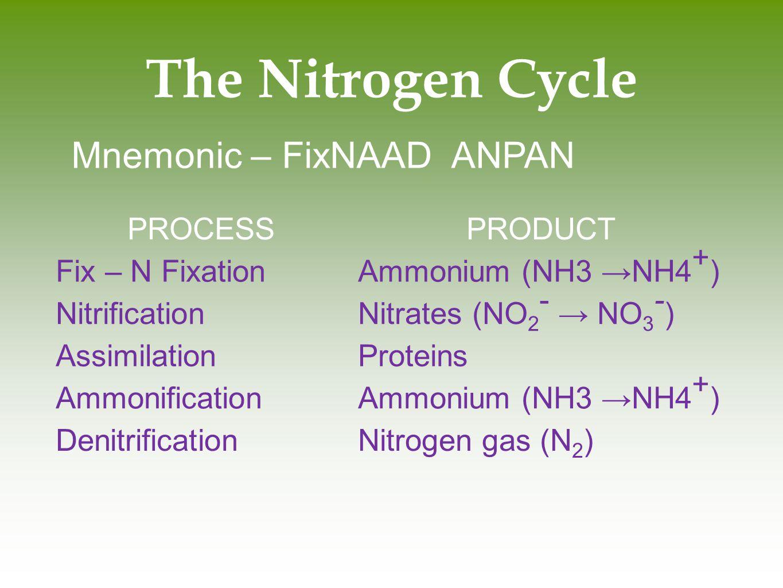 The Nitrogen Cycle Mnemonic – FixNAAD ANPAN PROCESSPRODUCT Fix – N FixationAmmonium (NH3 →NH4 + ) NitrificationNitrates (NO 2 - → NO 3 - ) Assimilatio