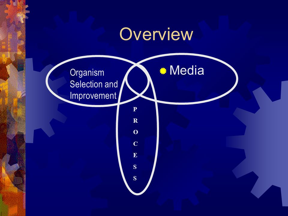 Overview Organism Selection and Improvement  Media PROCESSPROCESS