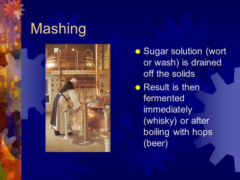 Mashing  Sugar solution (wort or wash) is drained off the solids  Result is then fermented immediately (whisky) or after boiling with hops (beer)