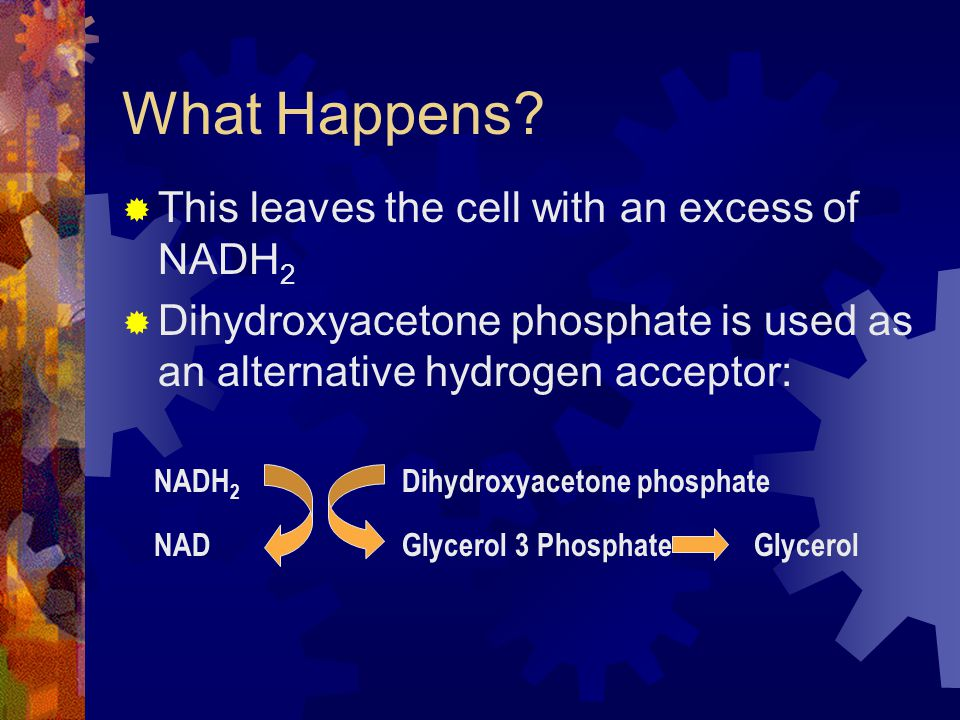 What Happens?  This leaves the cell with an excess of NADH 2  Dihydroxyacetone phosphate is used as an alternative hydrogen acceptor: NADH 2 NAD Dih