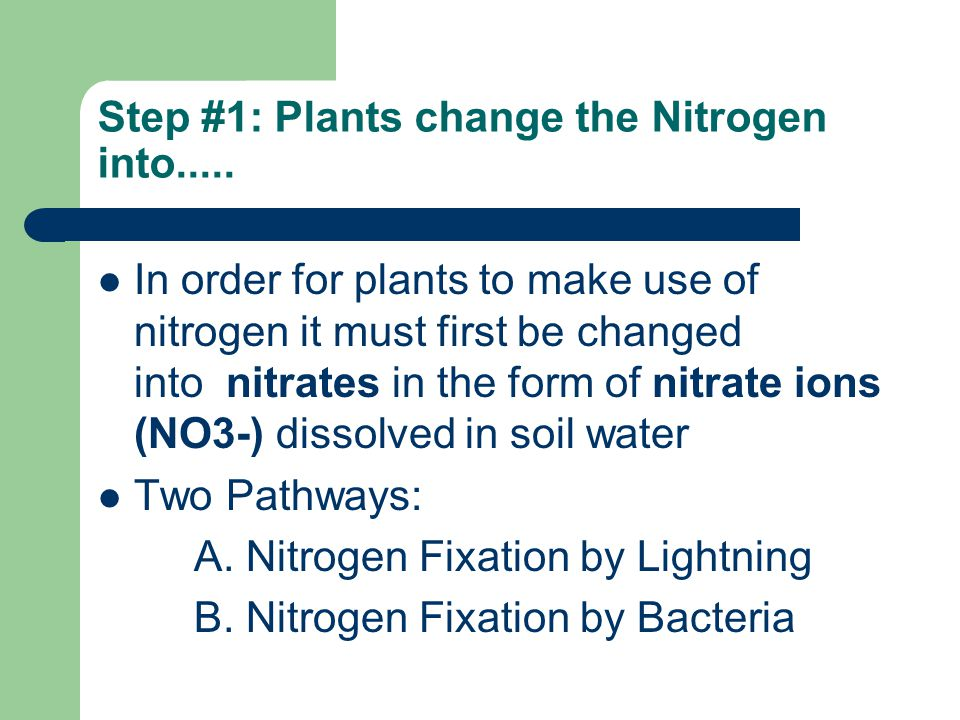 Step #1: Plants change the Nitrogen into.....