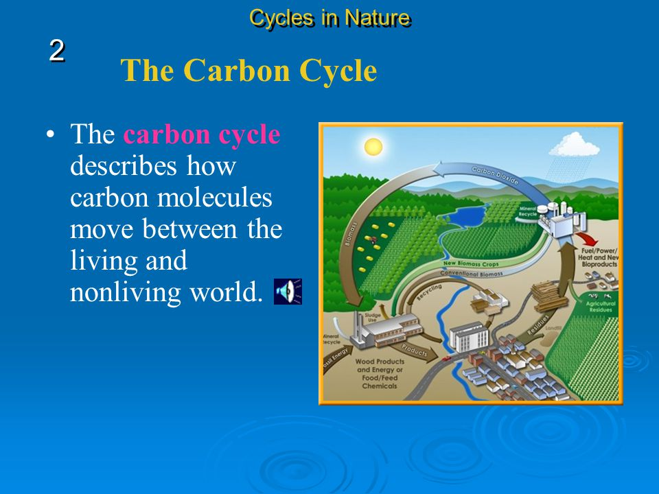 The Carbon Cycle Cycles in Nature 2 2 Carbon is an important part of soil humus, which is formed when dead organisms decay, and it is found in the atm