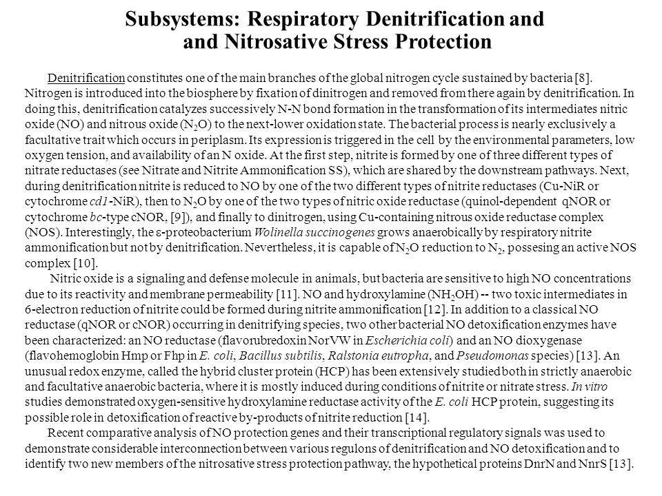 Subsystems: Respiratory Denitrification and and Nitrosative Stress Protection Denitrification constitutes one of the main branches of the global nitrogen cycle sustained by bacteria [8].