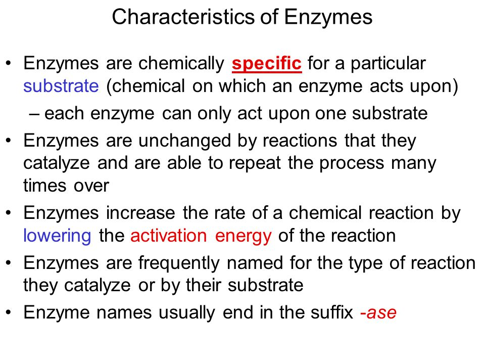 Characteristics of Enzymes Enzymes are chemically specific for a particular substrate (chemical on which an enzyme acts upon) –each enzyme can only act upon one substrate Enzymes are unchanged by reactions that they catalyze and are able to repeat the process many times over Enzymes increase the rate of a chemical reaction by lowering the activation energy of the reaction Enzymes are frequently named for the type of reaction they catalyze or by their substrate Enzyme names usually end in the suffix -ase