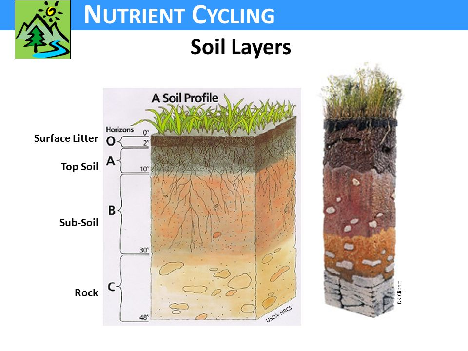 N UTRIENT C YCLING Soil Layers DK Clipart USDA-NRCS Surface Litter Top Soil Sub-Soil Rock