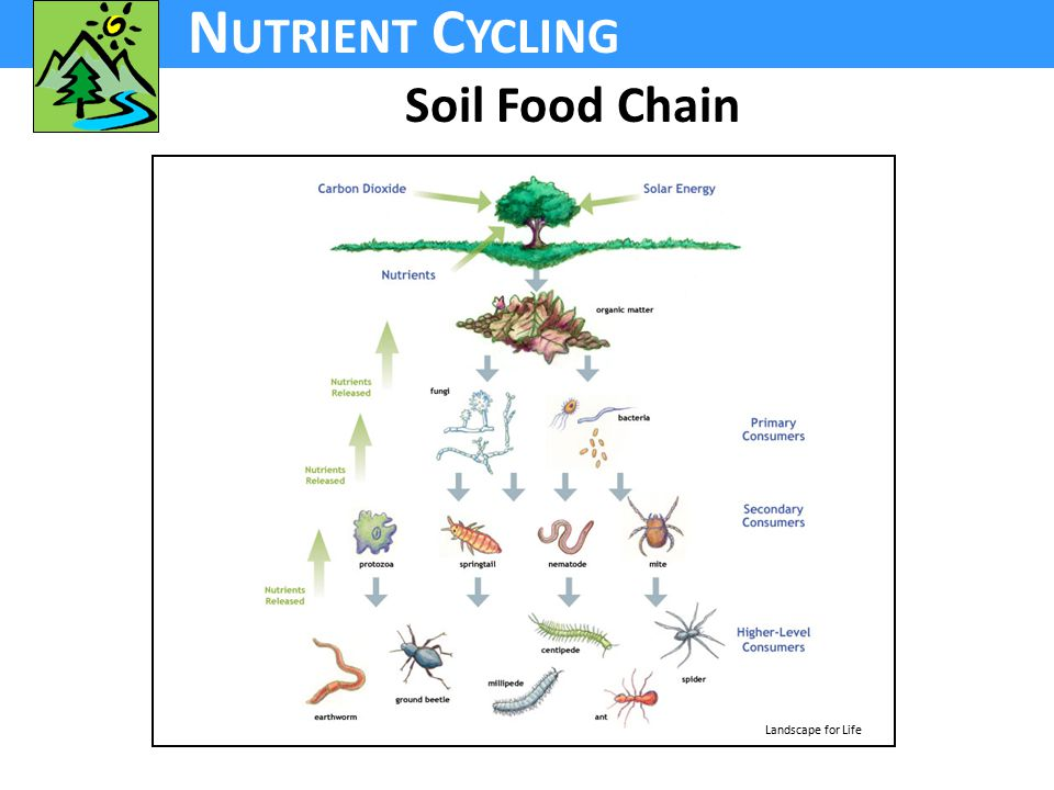 N UTRIENT C YCLING Soil Food Chain Landscape for Life