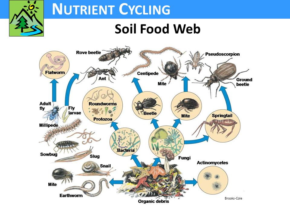 N UTRIENT C YCLING Soil Food Web Brooks-Cole