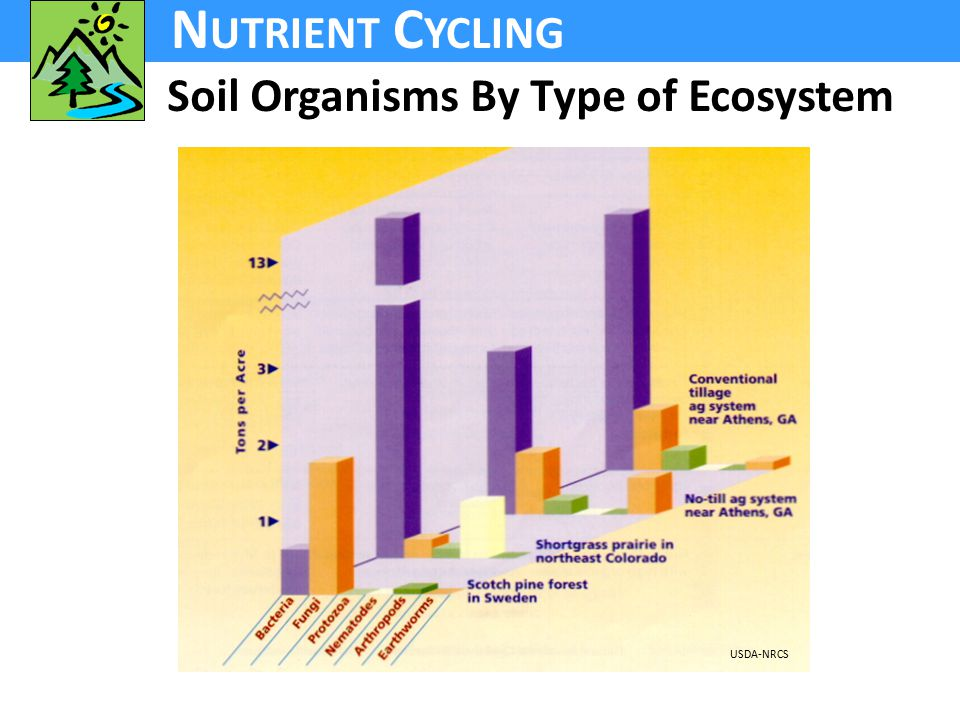 N UTRIENT C YCLING Soil Organisms By Type of Ecosystem USDA-NRCS