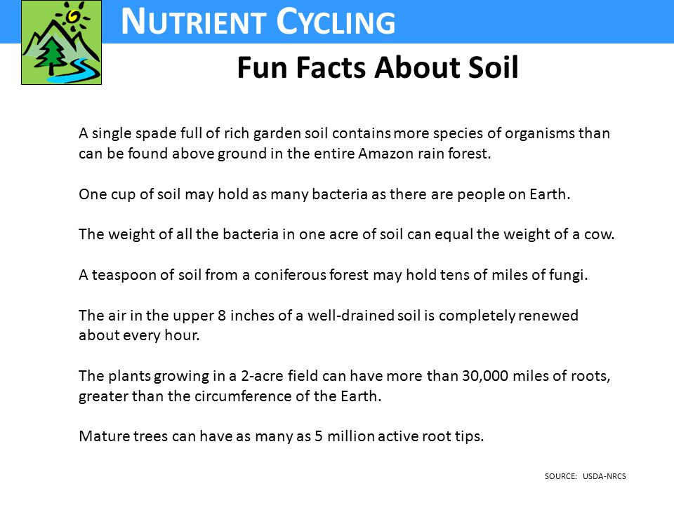 N UTRIENT C YCLING Fun Facts About Soil The tips of small plant roots move through the soil with a twisting screw-like motion.