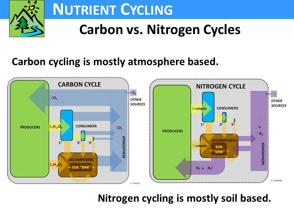 N UTRIENT C YCLING Carbon vs. Nitrogen Cycles Nitrogen cycling is mostly soil based.