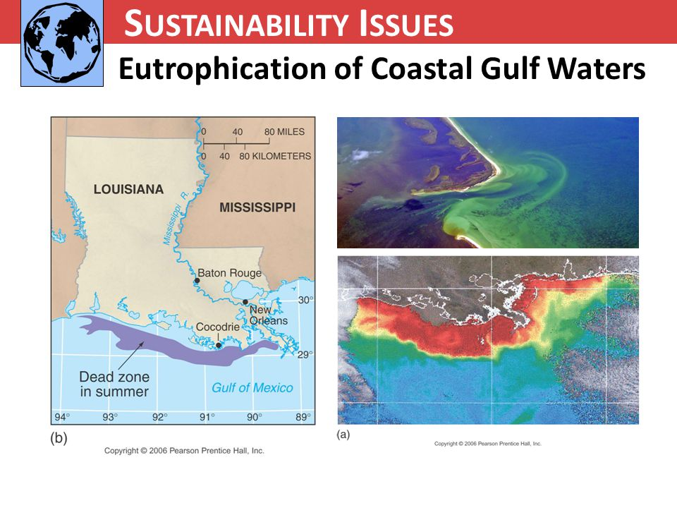 N UTRIENT C YCLING S USTAINABILITY I SSUES Eutrophication of Coastal Gulf Waters