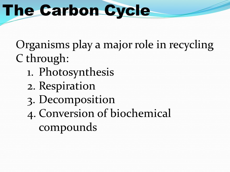 Organisms play a major role in recycling C through: 1.Photosynthesis 2.Respiration 3.Decomposition 4.Conversion of biochemical compounds The Carbon Cycle