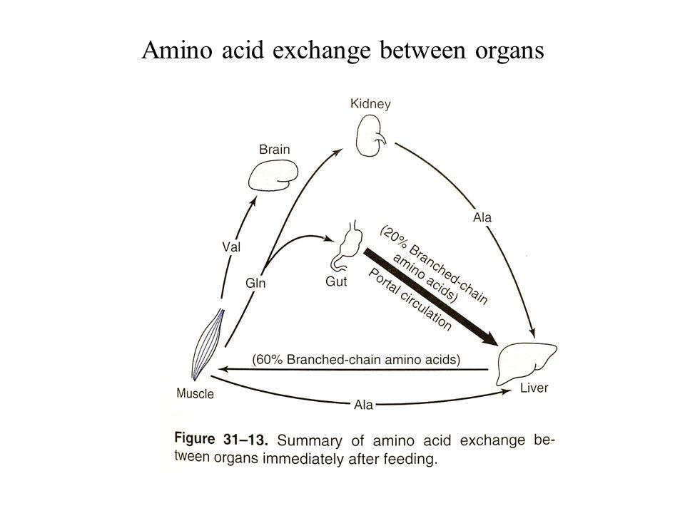 Amino acid exchange between organs