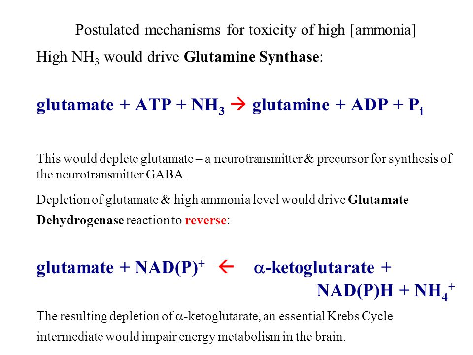 Postulated mechanisms for toxicity of high [ammonia] High NH 3 would drive Glutamine Synthase: glutamate + ATP + NH 3  glutamine + ADP + P i This would deplete glutamate – a neurotransmitter & precursor for synthesis of the neurotransmitter GABA.