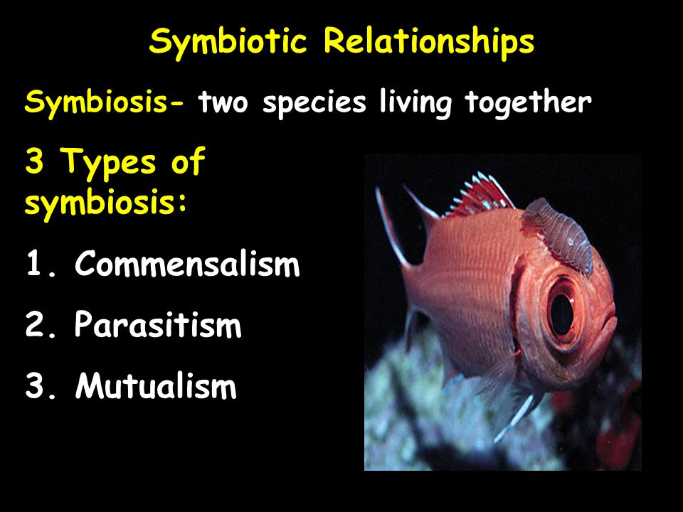 Symbiotic Relationships Symbiosis- two species living together 3 Types of symbiosis: 1. Commensalism 2. Parasitism 3. Mutualism