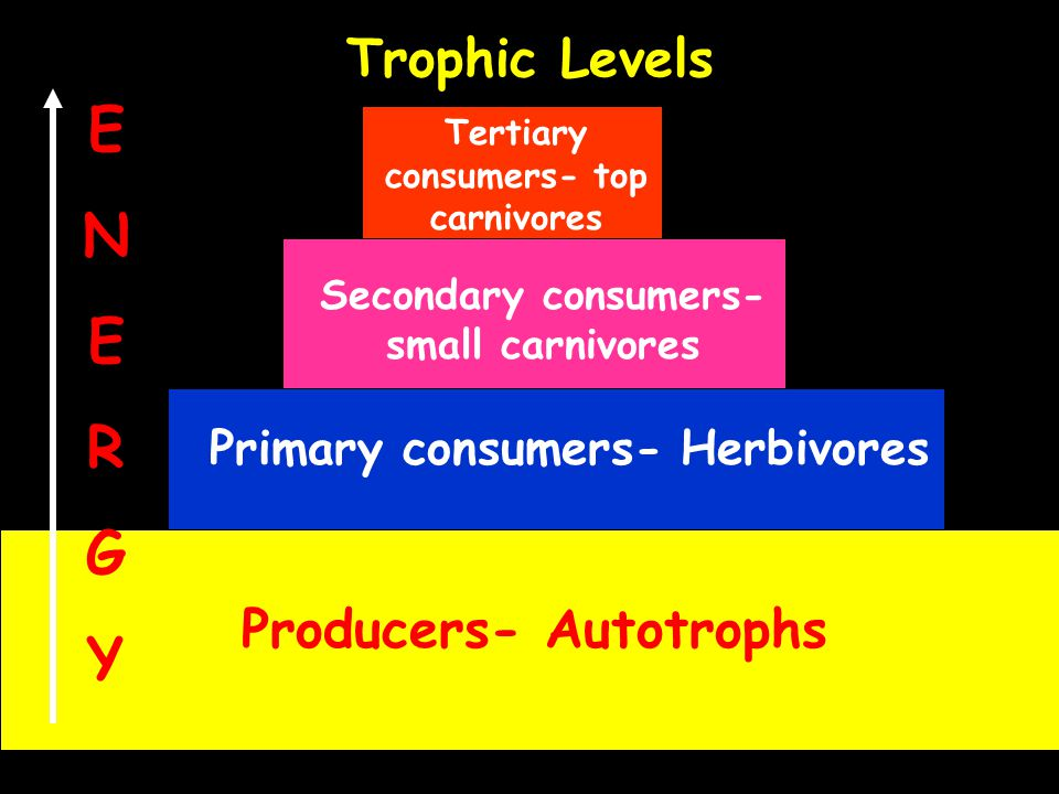 Trophic Levels Producers- Autotrophs Primary consumers- Herbivores Secondary consumers- small carnivores Tertiary consumers- top carnivores ENERGYENER