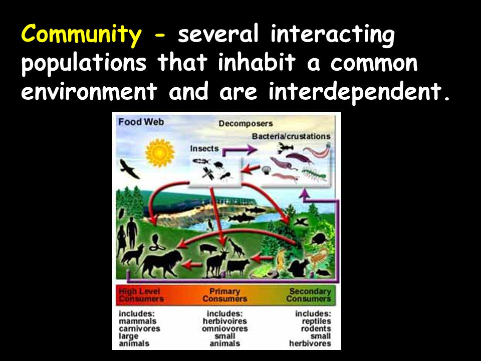 Ecosystem - populations in a community and the abiotic factors with which they interact (ex.