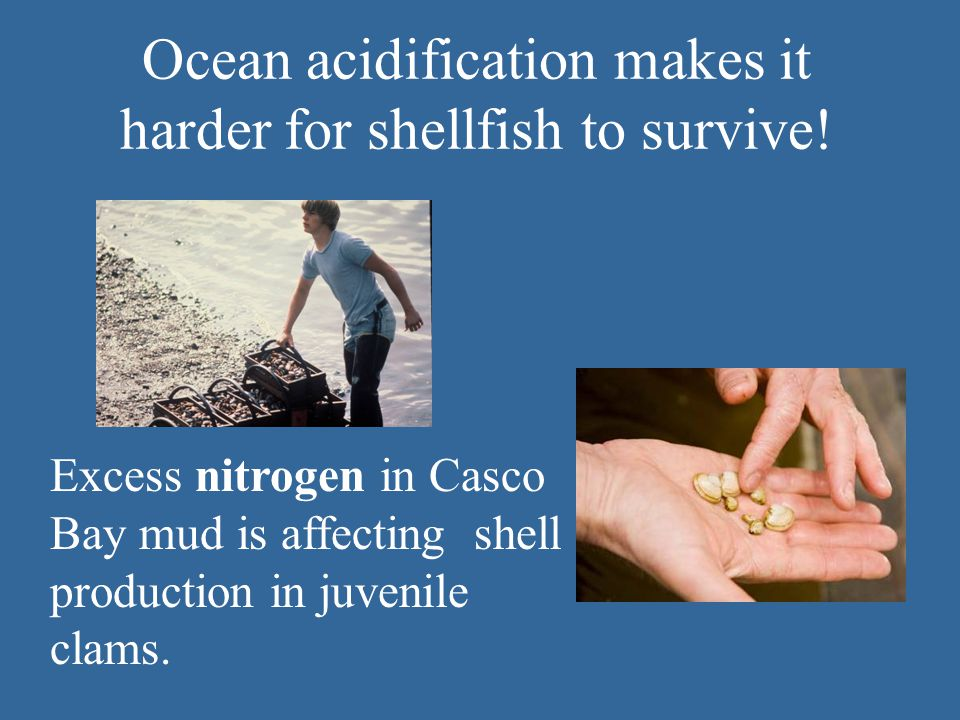 Ocean acidification makes it harder for shellfish to survive.