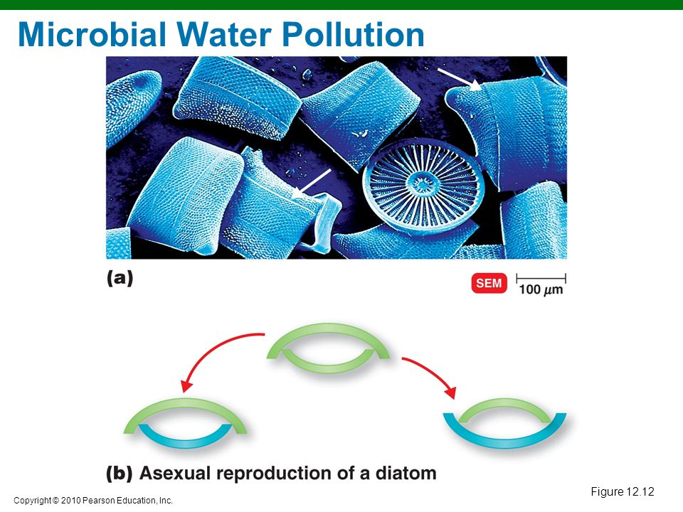 Copyright © 2010 Pearson Education, Inc. Figure 12.12 Microbial Water Pollution