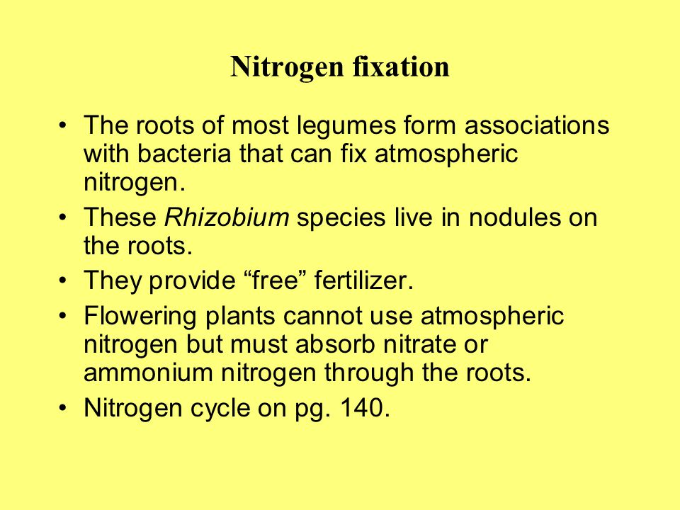 Nitrogen fixation The roots of most legumes form associations with bacteria that can fix atmospheric nitrogen.