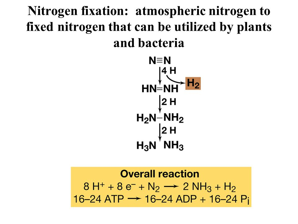 Nitrogen fixation: atmospheric nitrogen to fixed nitrogen that can be utilized by plants and bacteria