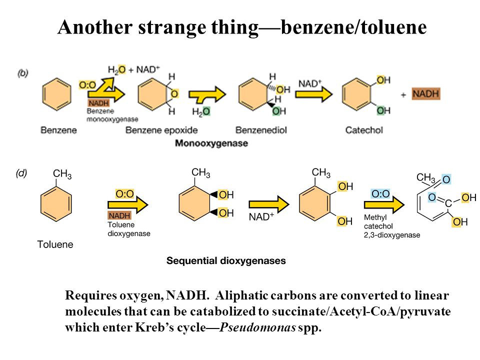 Another strange thing—benzene/toluene Requires oxygen, NADH. Aliphatic carbons are converted to linear molecules that can be catabolized to succinate/