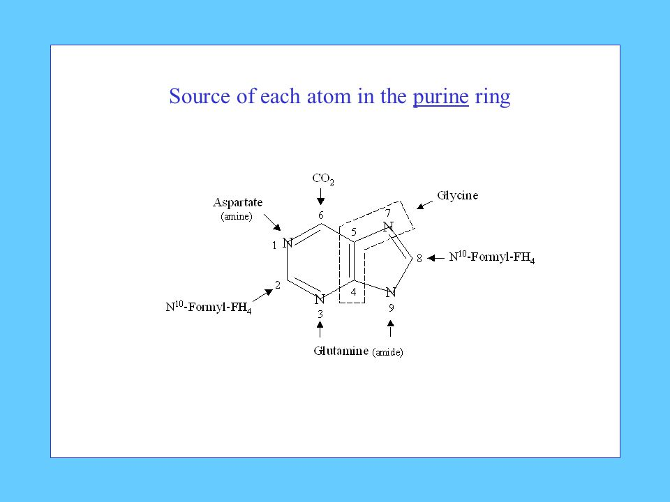 Source of each atom in the purine ring