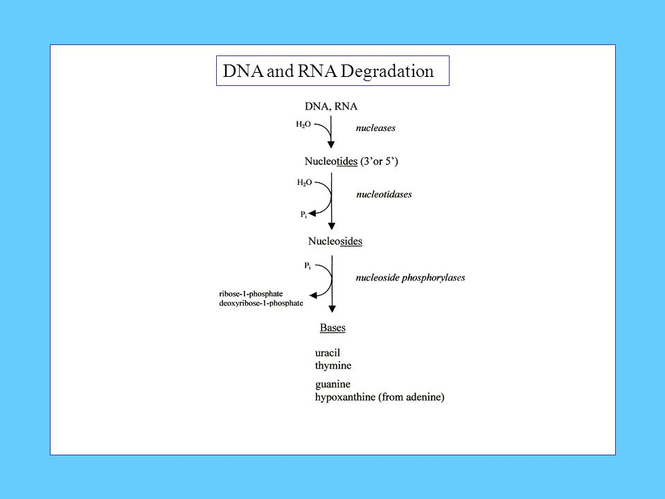 DNA and RNA Degradation