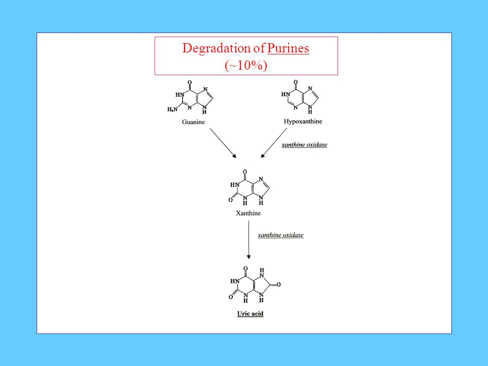 Degradation of Purines (~10%)