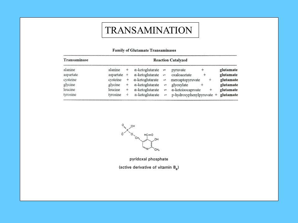 TRANSAMINATION