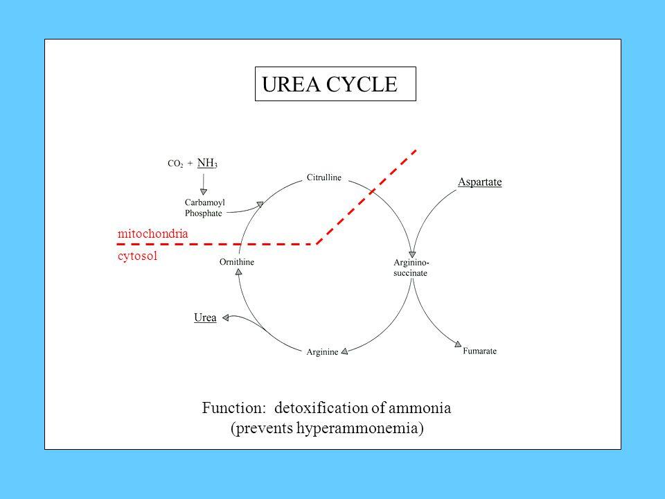 UREA CYCLE mitochondria cytosol Function: detoxification of ammonia (prevents hyperammonemia)