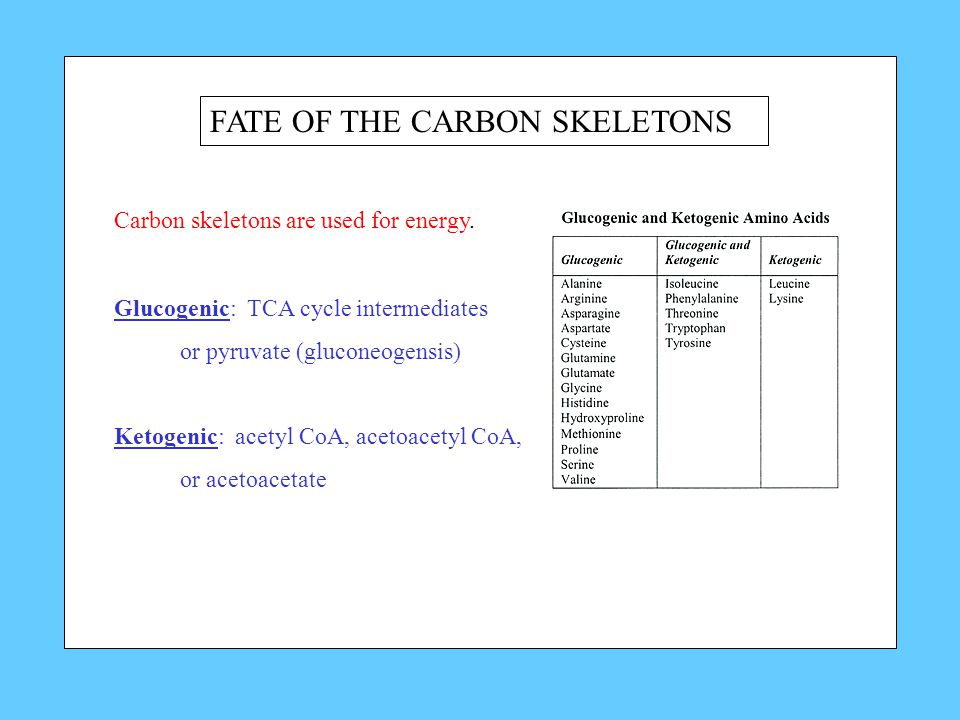 FATE OF THE CARBON SKELETONS Carbon skeletons are used for energy.