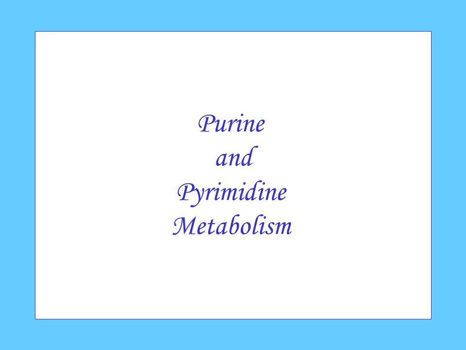 Purine and Pyrimidine Metabolism