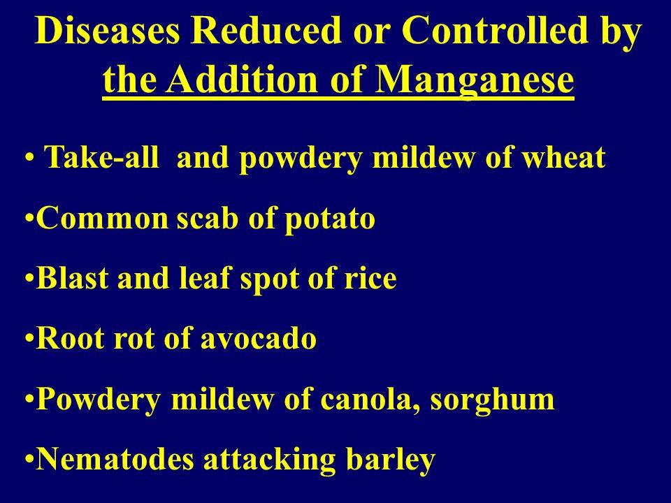 Manganese Mn ++ Mn +2 inhibits the enzyme pectin methyl-esterase.
