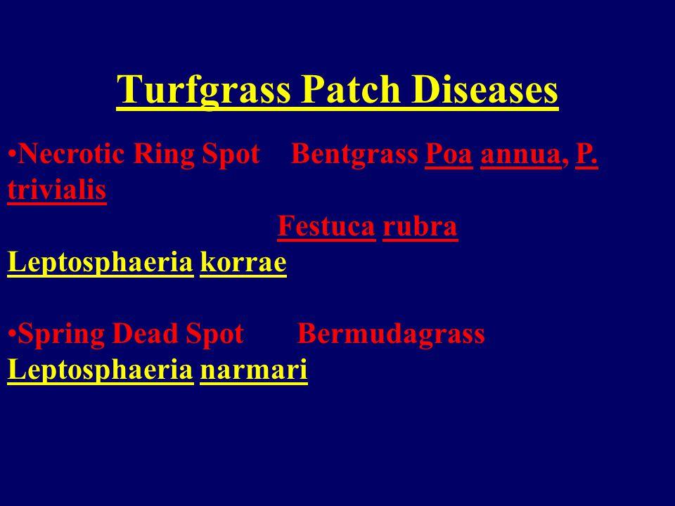Turfgrass Patch Diseases Take-all Bentgrass Gaeumannomyces graminis var.