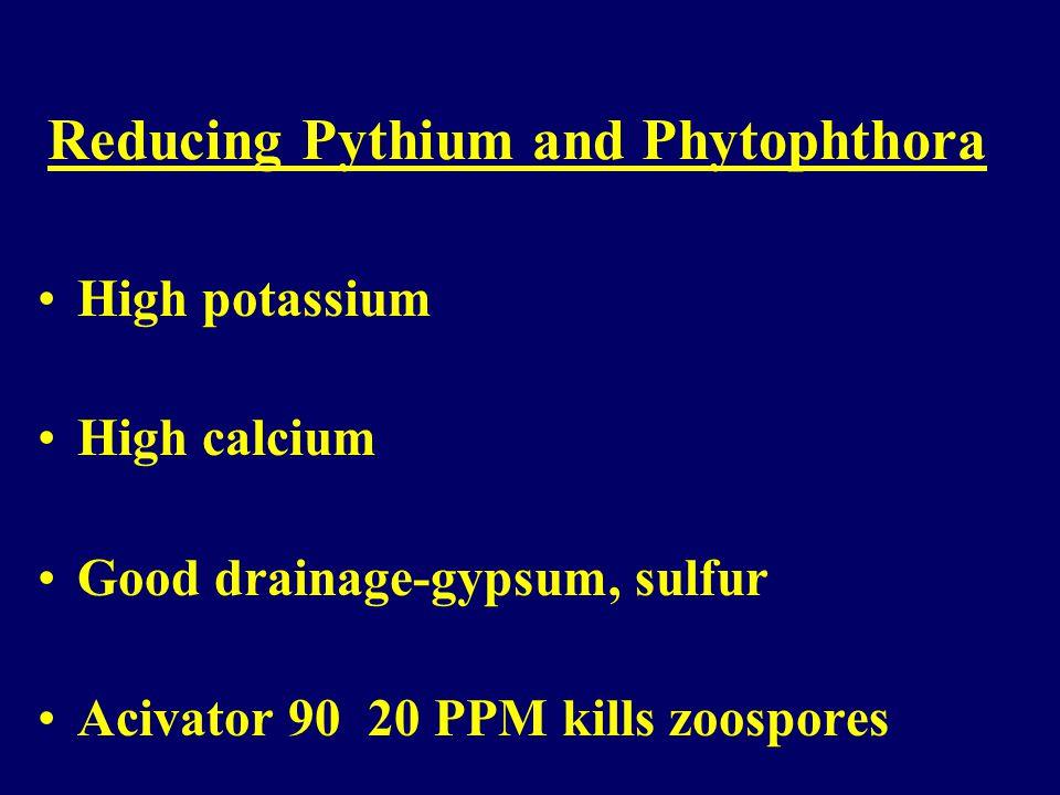Fusarium Blight Fusarium species (fungus) Reducing Fusarium Blight Reduce stress (potassium, calcium) Maintain soil pH close to neutral (lime) Control nitrogen