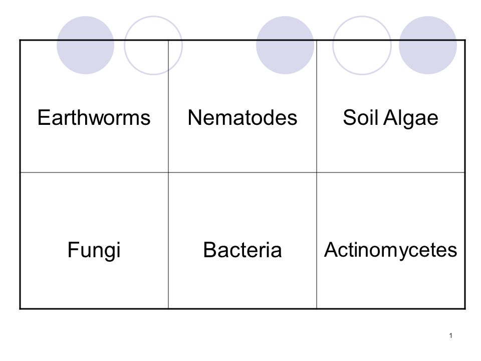 1 EarthwormsNematodesSoil Algae FungiBacteria Actinomycetes