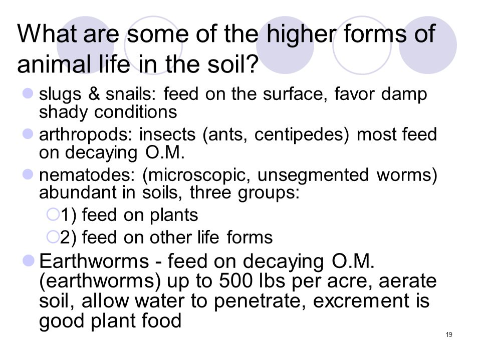 19 What are some of the higher forms of animal life in the soil.