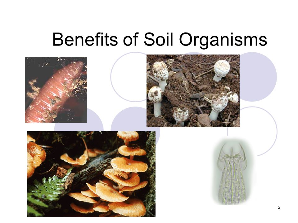 2 Benefits of Soil Organisms