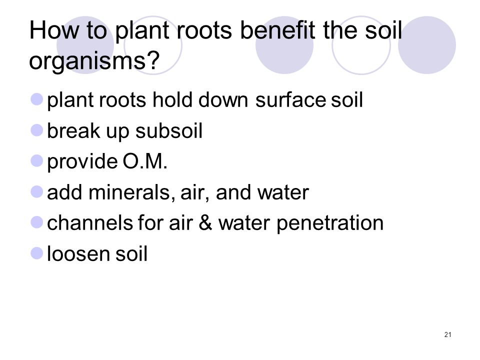 21 How to plant roots benefit the soil organisms.
