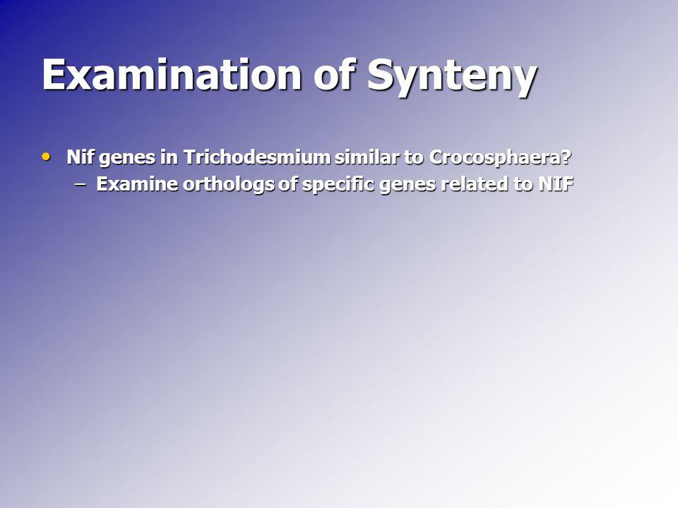 Examination of Synteny Nif genes in Trichodesmium similar to Crocosphaera? Nif genes in Trichodesmium similar to Crocosphaera? –Examine orthologs of s
