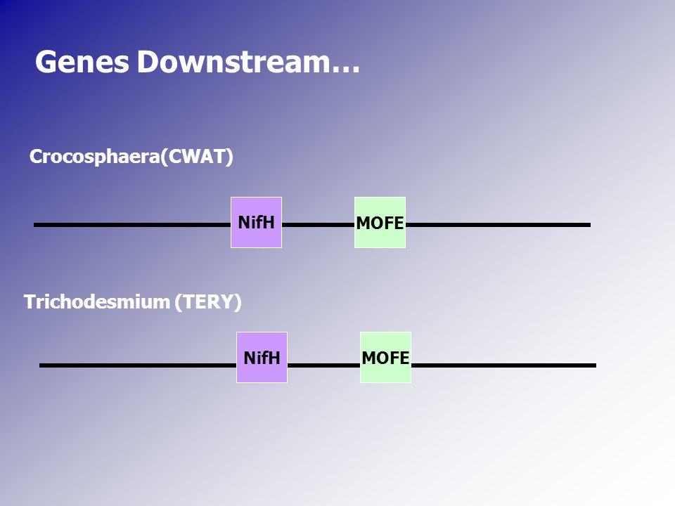 NifH Crocosphaera(CWAT) Trichodesmium (TERY) MOFE Genes Downstream…