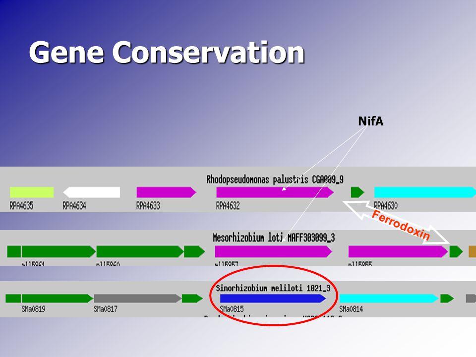 Gene Conservation NifA Ferrodoxin
