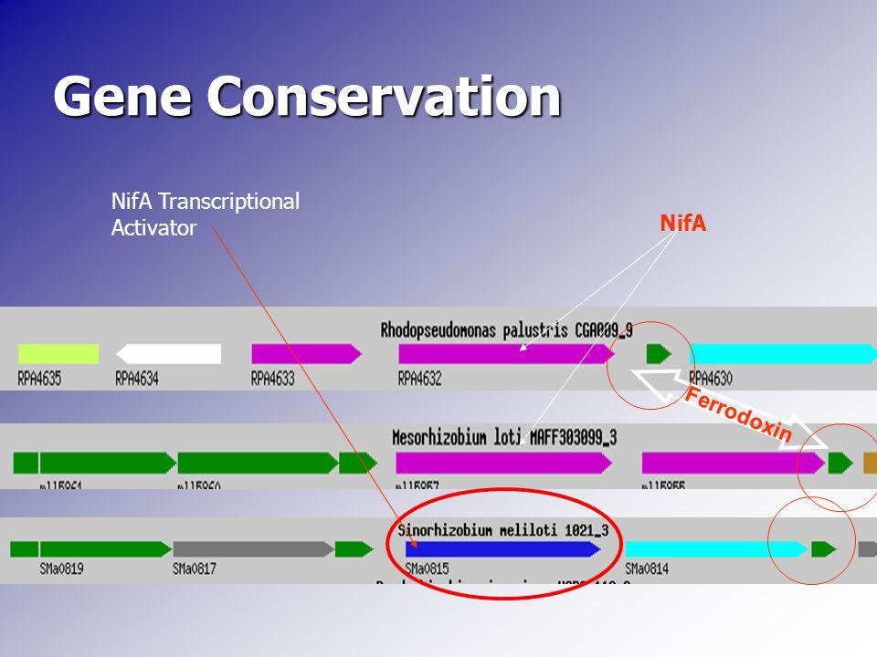 Gene Conservation NifA Ferrodoxin NifA Transcriptional Activator