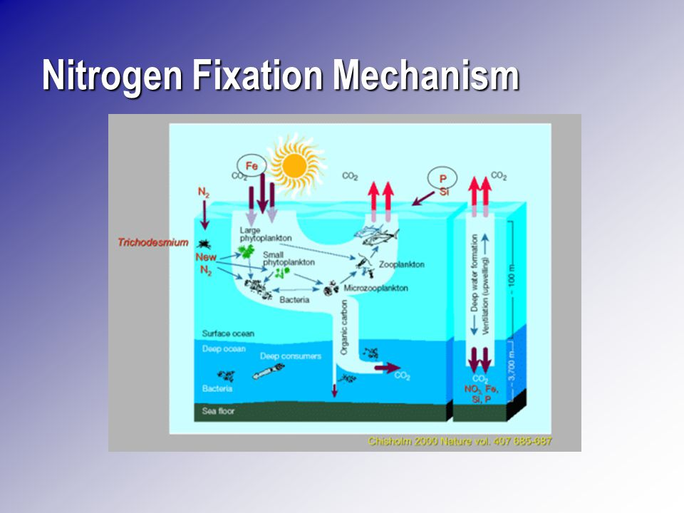 b a a b Reduced Fe Protein Fe-Mo ProteinRegulation Electron Transport Ferredoxin ATP Reduction of Electrons Donated to N2Formation of NH3