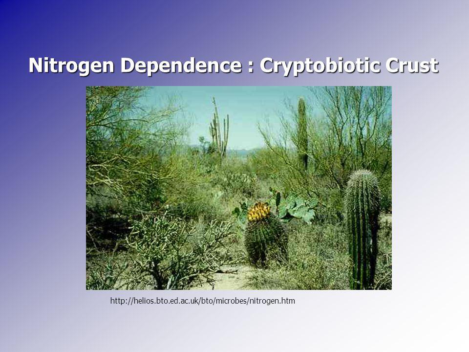 Nitrogen Dependence : Cryptobiotic Crust http://helios.bto.ed.ac.uk/bto/microbes/nitrogen.htm