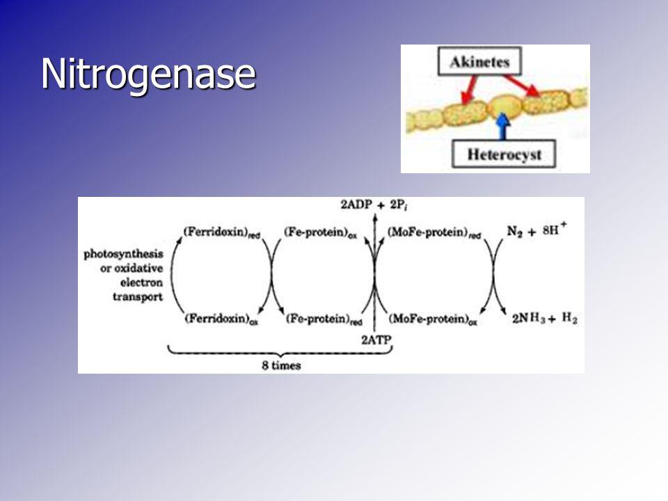 Nitrogenase